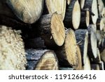 felled trees in a forest close... | Shutterstock . vector #1191266416