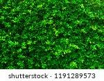 green leaves nature background  ... | Shutterstock . vector #1191289573