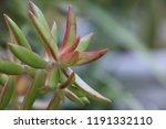 succulent plants in patio... | Shutterstock . vector #1191332110