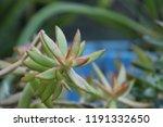 succulent plants in patio... | Shutterstock . vector #1191332650