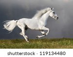 White Horse Runs Gallop On The...