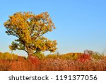 all the colors of autumn....   Shutterstock . vector #1191377056
