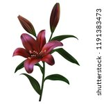 a lily with buds and green... | Shutterstock .eps vector #1191383473