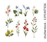 watercolor floral set  forest... | Shutterstock . vector #1191407326