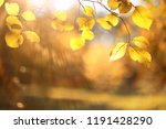 autumn rain in the park during... | Shutterstock . vector #1191428290
