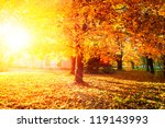 autumn. fall. autumnal park.... | Shutterstock . vector #119143993