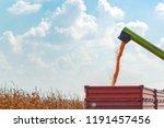 combine harvester unloader... | Shutterstock . vector #1191457456