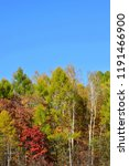 autumn apparel of the forest....   Shutterstock . vector #1191466900