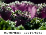 green and pink natural... | Shutterstock . vector #1191475963