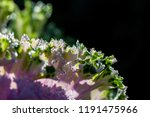 green and pink natural... | Shutterstock . vector #1191475966