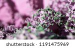 green and pink natural... | Shutterstock . vector #1191475969