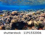 coral reef in egypt with color... | Shutterstock . vector #1191532006