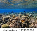 coral reef in egypt with color... | Shutterstock . vector #1191532036