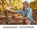 handsome smiling winemaker with ...   Shutterstock . vector #1191559636