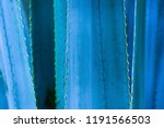 agave thorn leaf texture... | Shutterstock . vector #1191566503