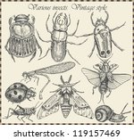 vector set insects in vintage... | Shutterstock .eps vector #119157469