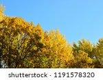 golden foliage of autumn trees. ...   Shutterstock . vector #1191578320
