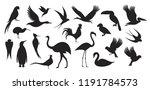wild bird. bird silhouette | Shutterstock .eps vector #1191784573