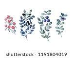watercolor wild berry set ... | Shutterstock . vector #1191804019