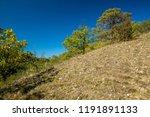 scorched fall landscape  green... | Shutterstock . vector #1191891133