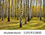 beautiful autumn landscape ... | Shutterstock . vector #1191911800