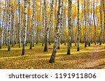 beautiful autumn landscape ... | Shutterstock . vector #1191911806