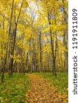 beautiful autumn landscape ... | Shutterstock . vector #1191911809