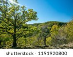 colorful autumn hilly landscape ... | Shutterstock . vector #1191920800