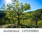 colorful autumn hilly landscape ... | Shutterstock . vector #1191920803