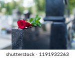 Rose on tombstone. Red rose on grave. Love - loss. Flower on memorial stone close up. Tragedy and sorrow for the loss of a loved one. Memory. Gravestone with withered rose