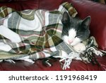 a gray cat with a white snout... | Shutterstock . vector #1191968419