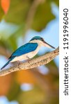 bird  collared kingfisher ... | Shutterstock . vector #1191996040