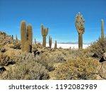 bolivia  salar de uyuni scenic...   Shutterstock . vector #1192082989