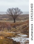 the lonely leafless tree... | Shutterstock . vector #1192131403
