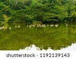 chonburi thailand 26 may 2018   ... | Shutterstock . vector #1192139143