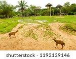 chonburi thailand 26 may 2018   ... | Shutterstock . vector #1192139146