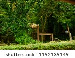 chonburi thailand 26 may 2018   ... | Shutterstock . vector #1192139149