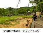 chonburi thailand 06 may 2018   ... | Shutterstock . vector #1192145629