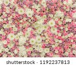 Soft Pastel Flower Wall Floral...