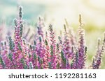 heather frozen flowers. bright...   Shutterstock . vector #1192281163