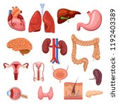 Human Internal Organs. Vector...