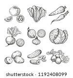 sketch vegetables. fresh tomato ... | Shutterstock .eps vector #1192408099