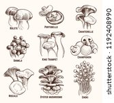 sketch mushrooms. autumn edible ... | Shutterstock .eps vector #1192408990