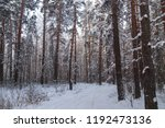 snowy trees in the forest in... | Shutterstock . vector #1192473136