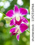 beautiful white purple orchids  ... | Shutterstock . vector #1192516966