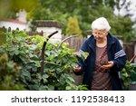 senior woman gardening at her... | Shutterstock . vector #1192538413
