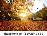 colorful autumn forest.... | Shutterstock . vector #1192543666