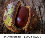 Horse Chestnut Opening  Also...