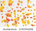 oak  maple  wild ash rowan... | Shutterstock .eps vector #1192556206