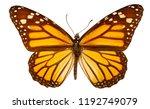 Stock photo danaus plexippus on a white background 1192749079